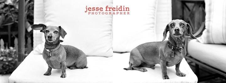 Jesse Freidin . Photographer cover
