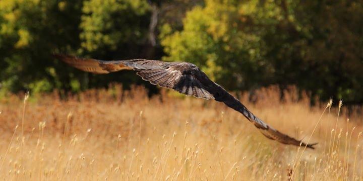 Wildlife Rehabilitation Center of Northern Utah cover