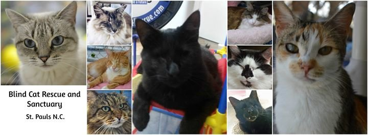 Blind Cat Rescue and Sanctuary, Inc. cover