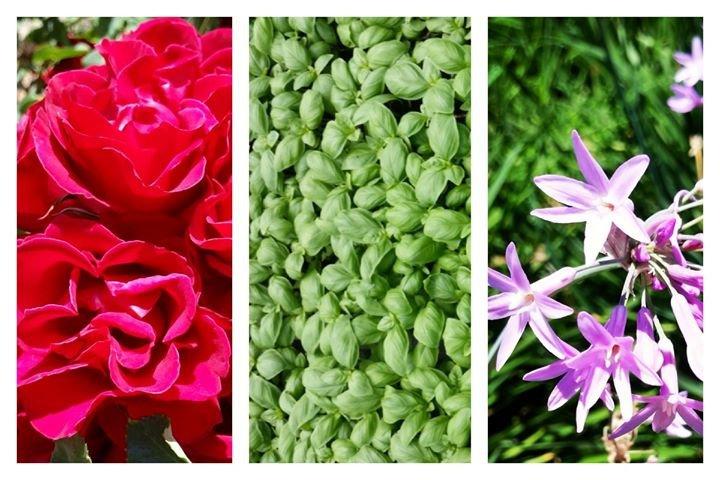 Microgreens cover