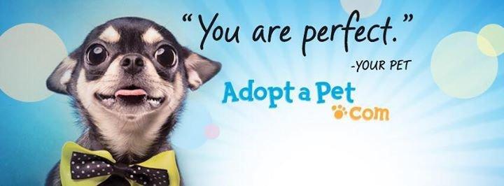 Adopt-a-Pet.com cover