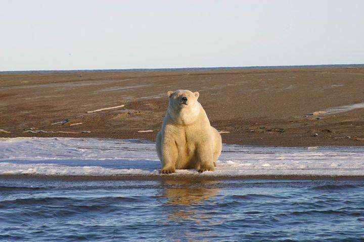 Alaska Marine Mammals Management cover