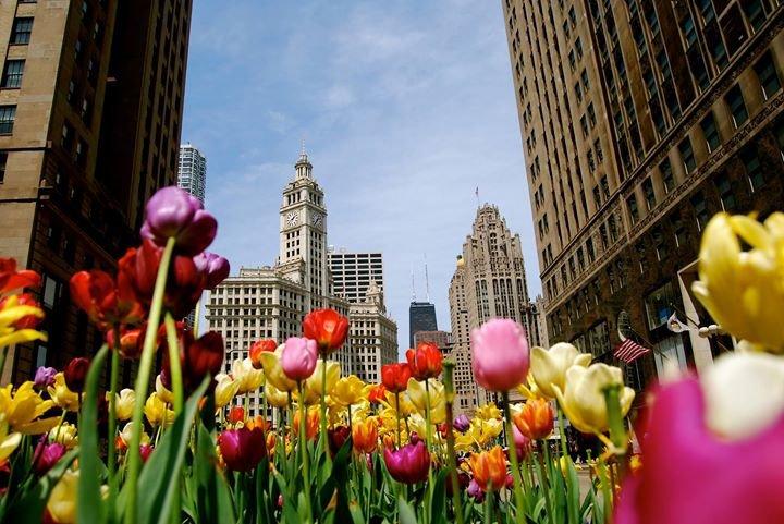 Hyatt Regency Chicago cover