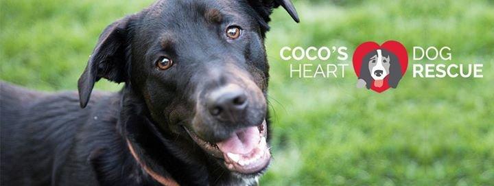 Coco's Heart Dog Rescue cover