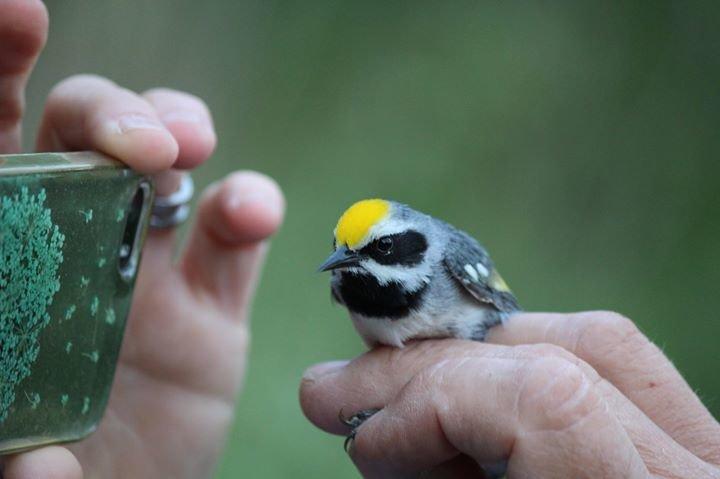 Audubon Vermont cover