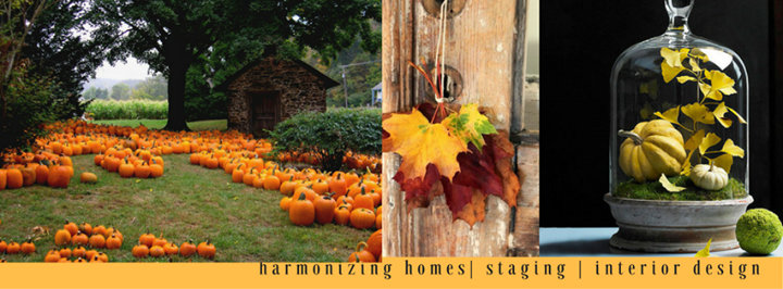 Shore Chicy Designs by Harmonizing Homes cover