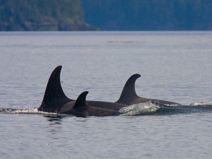 World Cetacean Alliance cover