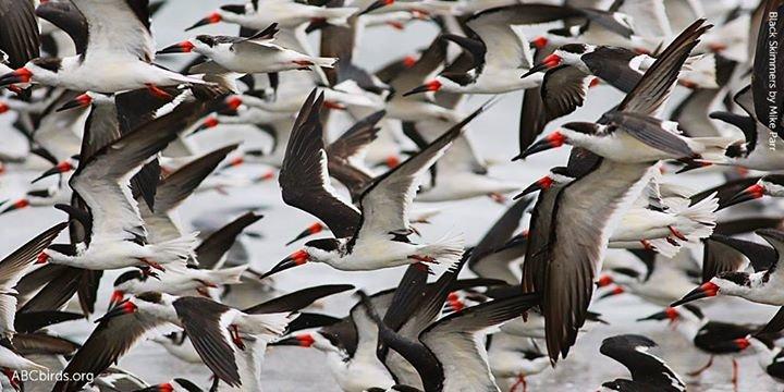 American Bird Conservancy cover