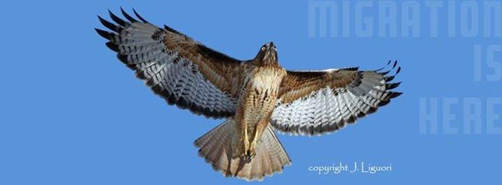 HawkWatch International (HWI) cover