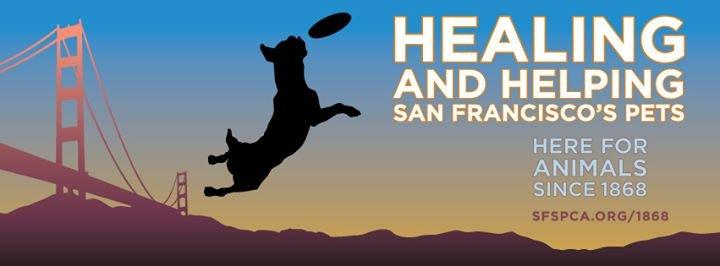 The San Francisco SPCA cover