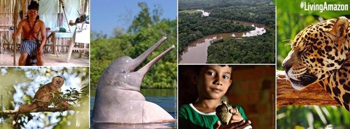WWF Amazonia cover