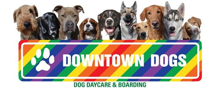 Downtown Dogs, Dog Daycare and Boarding cover