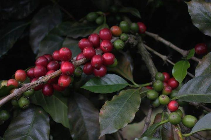 Dogwood Coffee Company cover