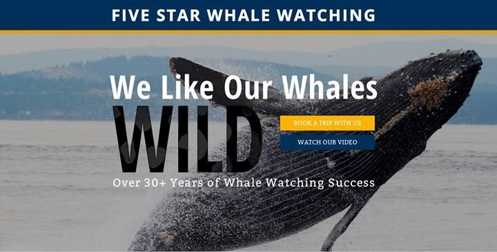 Five Star Whale Watching cover
