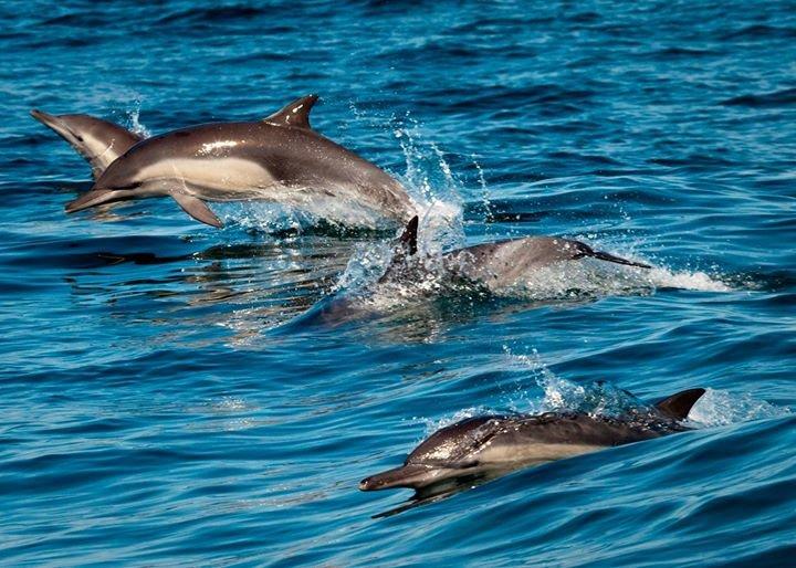 National Marine Sanctuary Foundation cover