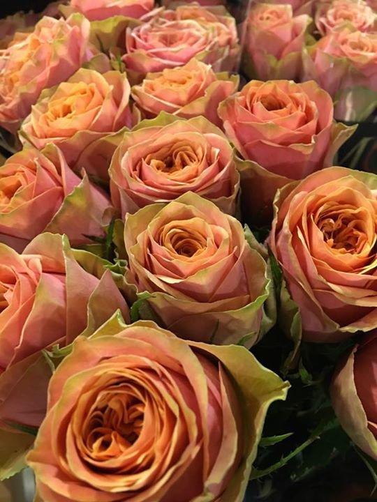 Flowervision Lancashire cover