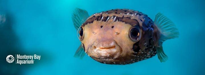 Monterey Bay Aquarium cover