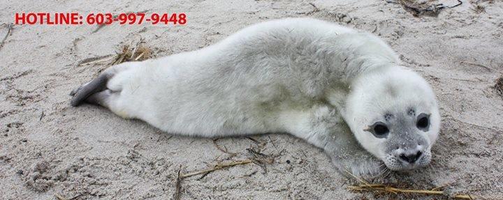New Hampshire Marine Mammal Rescue cover
