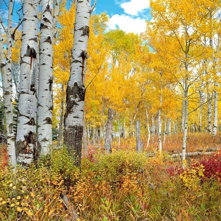 Montana Audubon cover