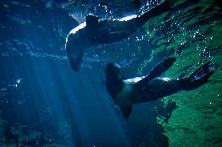 Marine Mammal Research Unit UBC (MMRU) cover