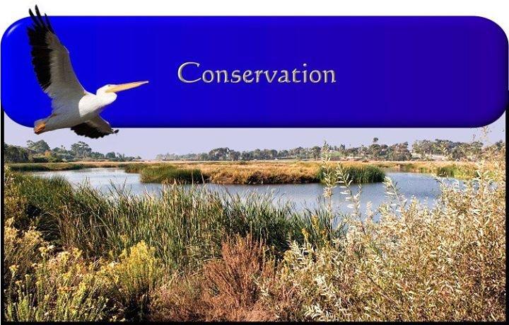 Buena Vista Audubon cover