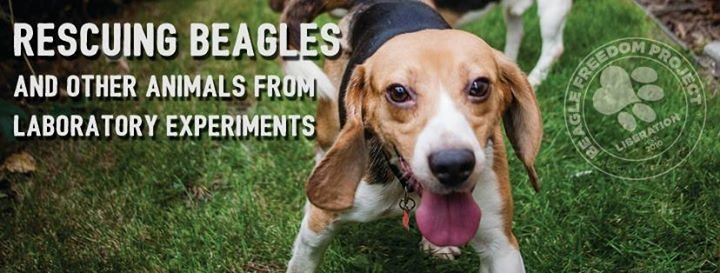 Beagle Freedom Project cover