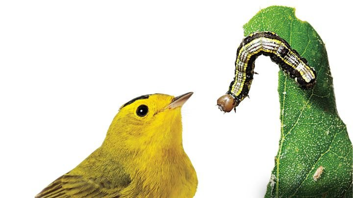 Audubon Mississippi cover