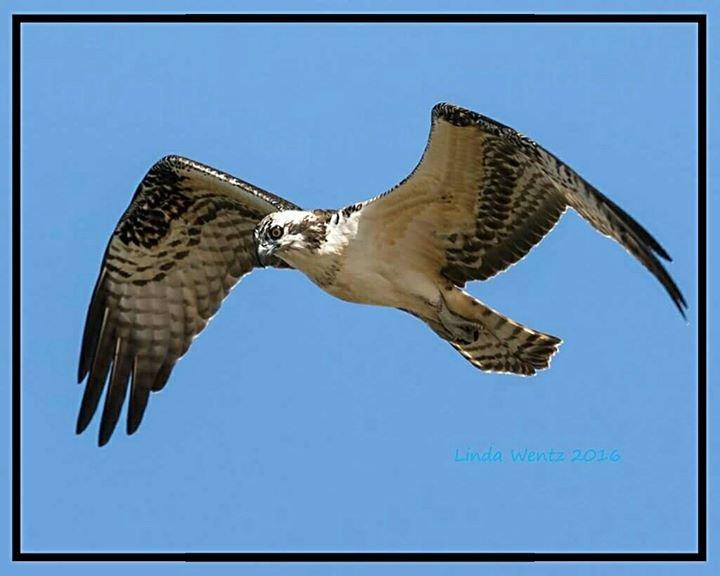 Tulare County Audubon Society cover