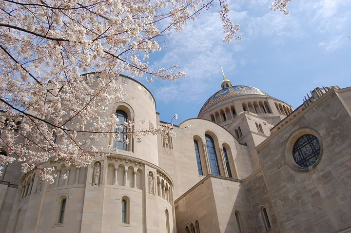 Basilica of the National Shrine of the Immaculate Conception cover