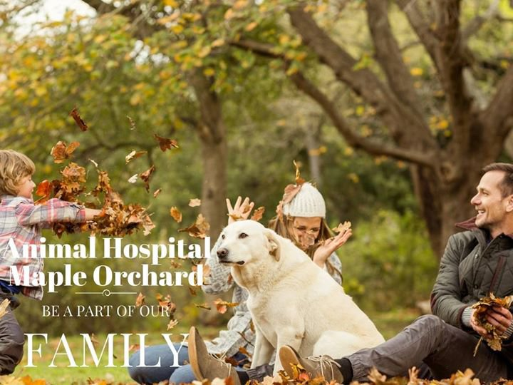 Animal Hospital Maple Orchard cover