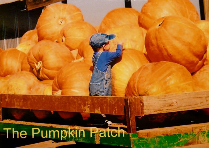 The Pumpkin Patch, Sauvie Island cover
