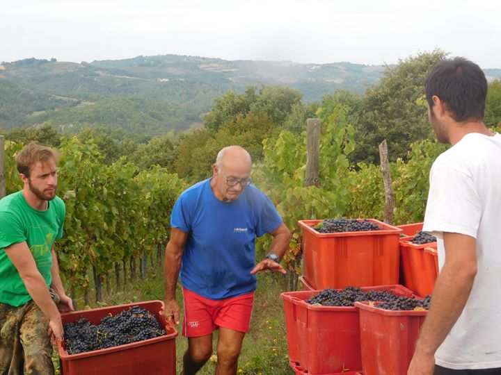 Cantina Zafferami Produzione e Vendita vini locali cover