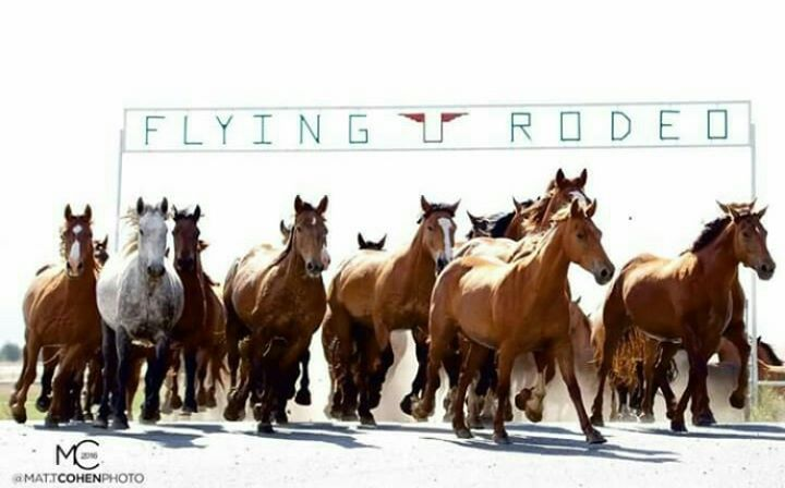 Flying U Rodeo Company cover