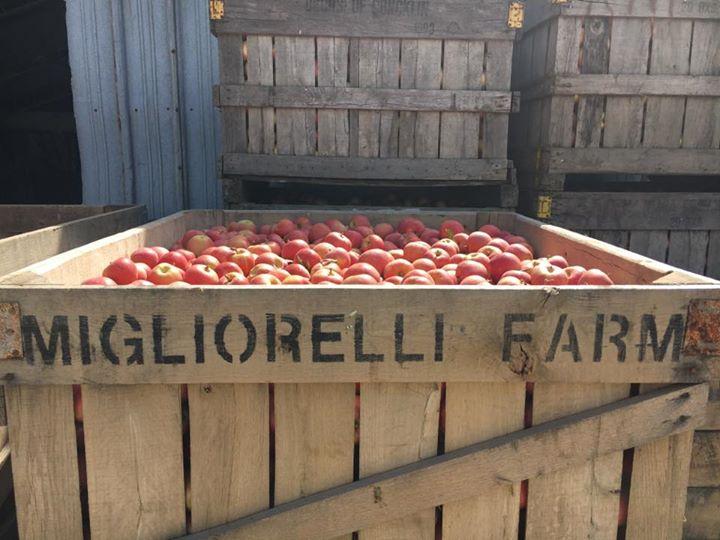 Migliorelli Farm cover