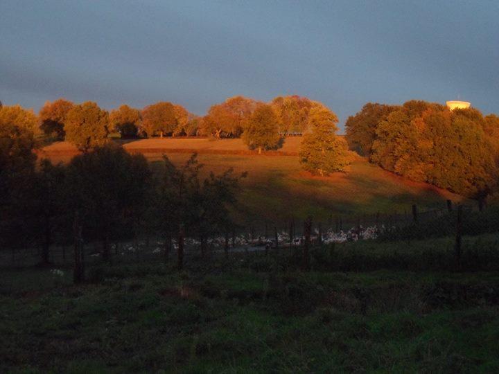Foie Gras de Bert, Grand Gite de Bert en Auvergne cover
