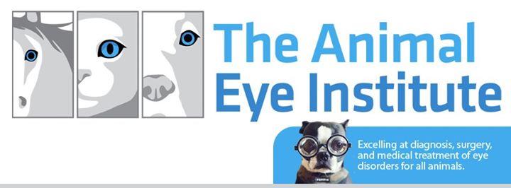 Animal Eye Institute cover
