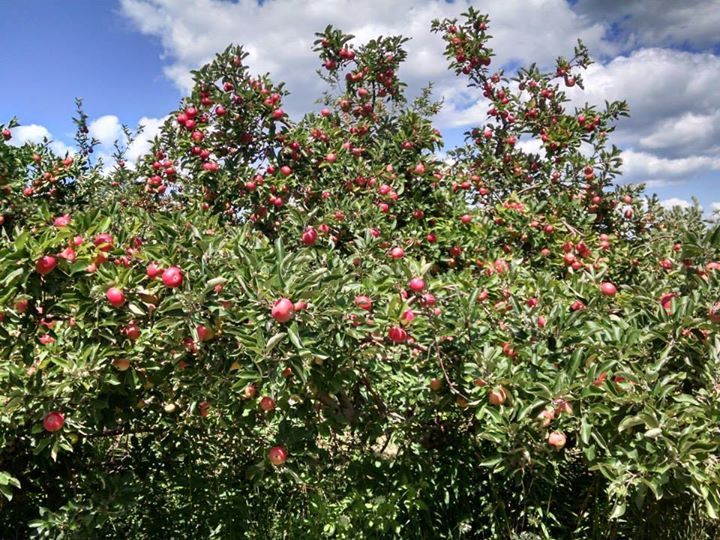 Littletree Orchards cover