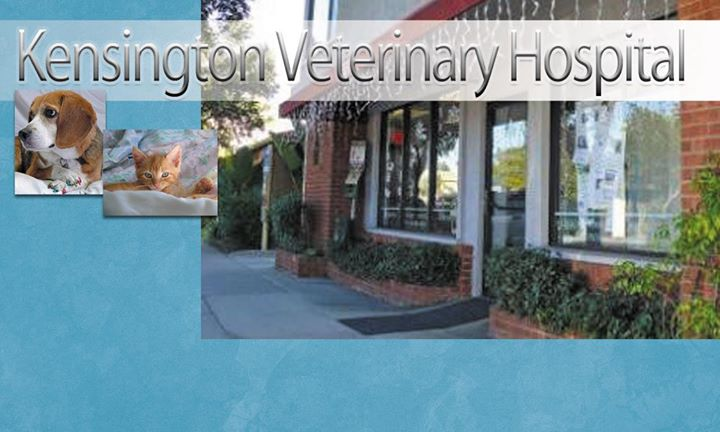 Kensington Veterinary Hospital cover