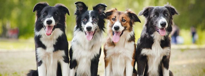 Irvington Pet Clinic cover