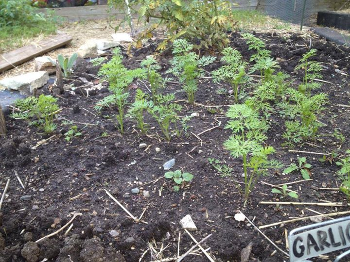 Ginkgo Organic Gardens cover