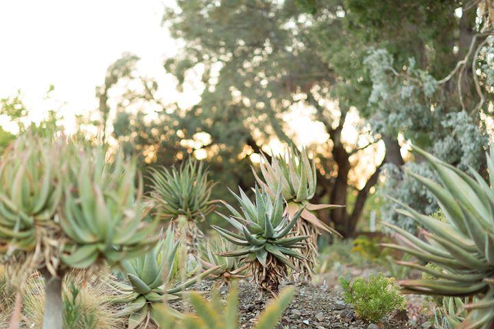 The Ruth Bancroft Garden cover