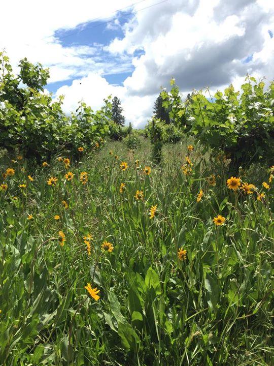 LaRocca Vineyards cover