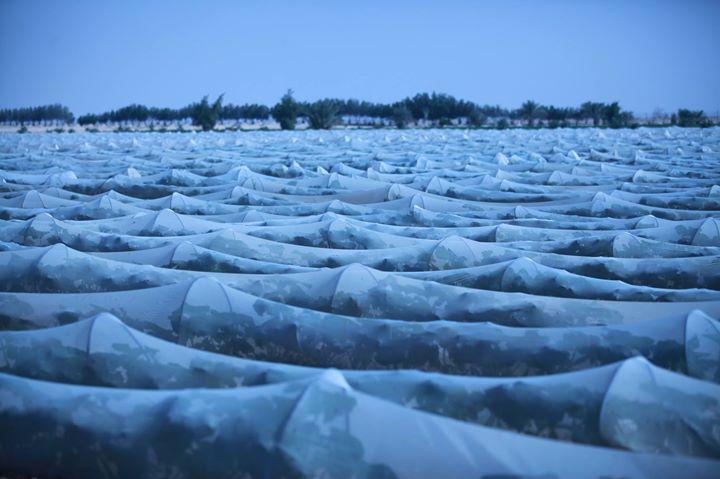 Al Safwa Farm cover