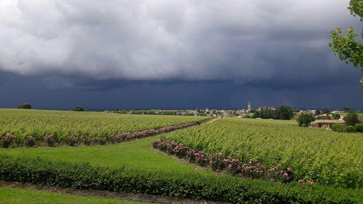 Château Troplong Mondot cover