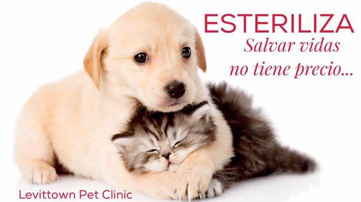 Levittown Pet Clinic cover