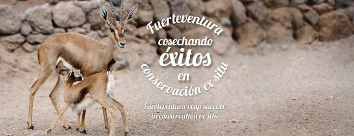 Fuerteventura Oasis Park cover