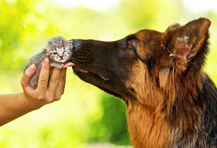 Приют для животных в Даугавпилсе cover