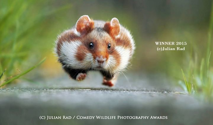 Comedy Wildlife Photography Awards cover