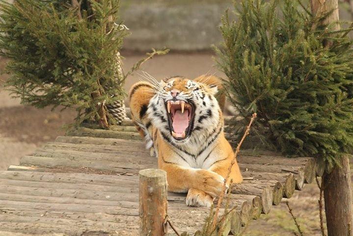 Калининградский Зоопарк - Официальная страница cover