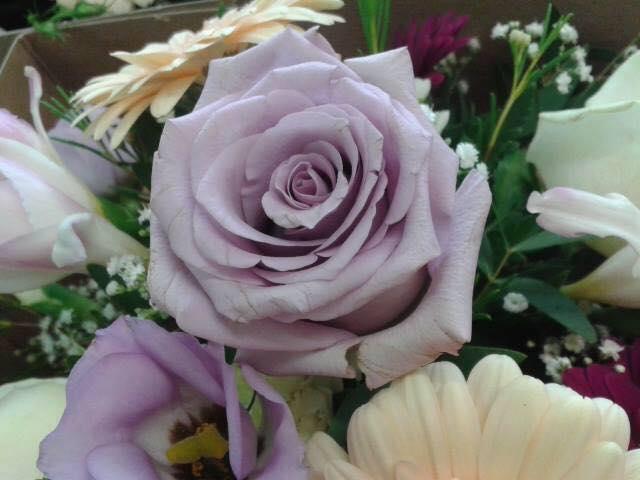 Jardiniere Florist cover